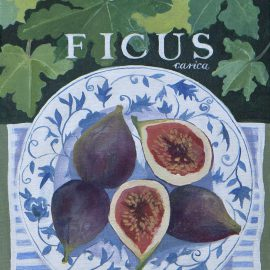 jennifer_abbott_fruit_paintings_01