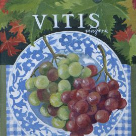 jennifer_abbott_fruit_paintings_09